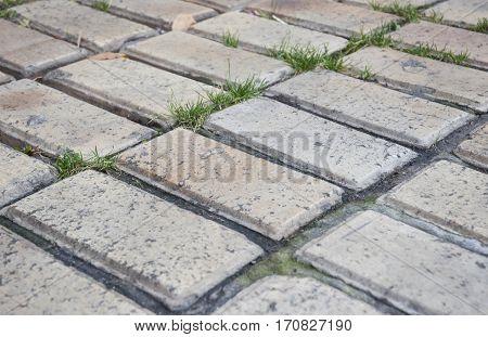 Garden pavement with grass. Old white brick pavement.