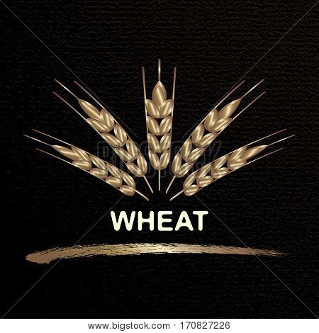 Wheat ears icons and design elements for beer, organic farm fresh food, bakery  design. Abstract concept for organic products, harvest, grain, bakery, healthy food.