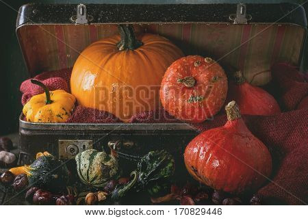 Assortment Of Different Pumpkins In Suitcase
