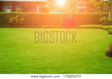 The evening sun shining on a green lawn, front yard for a backdrop.