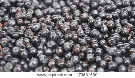 Forest Blueberry textured background. Freshly picked wild blueberries. Wild Blueberry Photo. Blueberries background. Copyspace for your text.