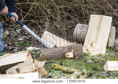 Hand holding a sledgehammer hit a wedge to split a birch log