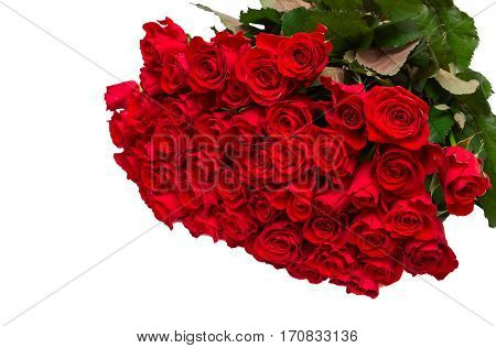 Large bouquet of fifty red roses on a white background. Valentine concept.