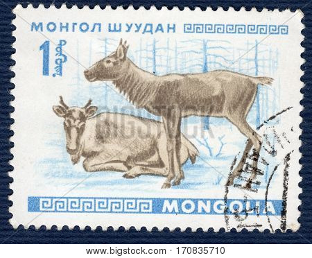 MONGOLIA - CIRCA 1968: Postage stamp printed in Mongolia shows image of a little saiga, from the series