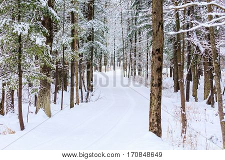 Long driveway in the woods covered with snow.