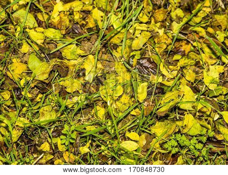Floor of color falling leaves on green grass