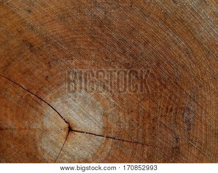 Background Of Cross Sectiontree Trunk, Clearly Visible Annual Rings. Tree Felling.