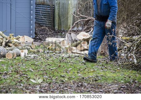 A tree fell in the garden and a man carries pieces of wood