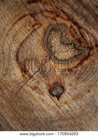Background Of Cross Sectiontree Trunk, Clearly Visible Annual Rings. Wood Texture.