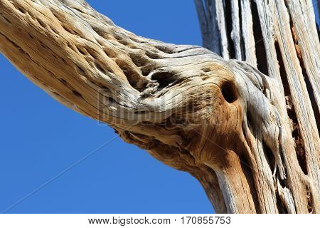 Abstract image of dead cactus with blue sky