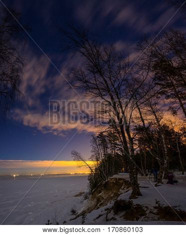 the trees on the shore of the Gulf of Finland in the moonlight, Leningrad oblast, Russia