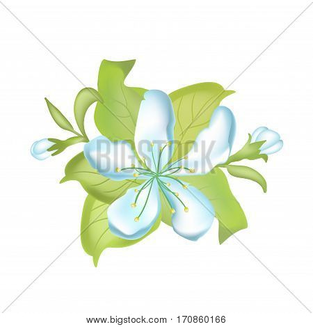 Vector nature botanical illustration. Apple blossom Hand drawn vector illustration of apple blossoms on white background.
