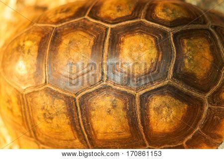 large turtle shell texture beautiful background horizontal