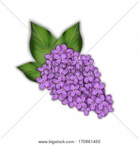 Lilac branch on a white background. Purple flowers.Vector illustration