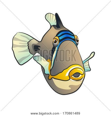Picasso triggerfish. Beautiful colorful tropical fish isolated on white: Picassofish