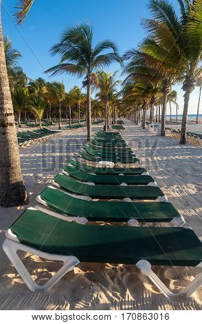 Rows of palm trees and empty sunbeds on a Mexican beach on the Yucatán Peninsula