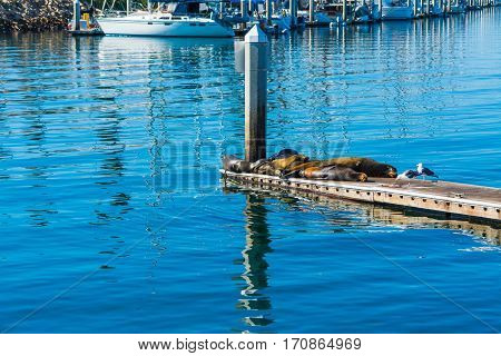 Some sea lions in Oceanside in California