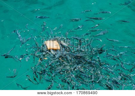 Live fish in blue water. Beauty of nature.