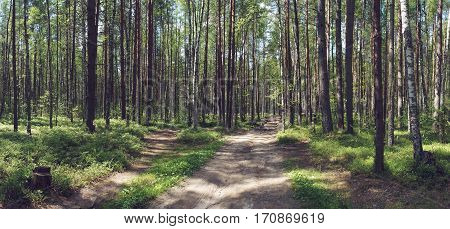 road in summer forest on a Sunny day. pine and birch. panorama.