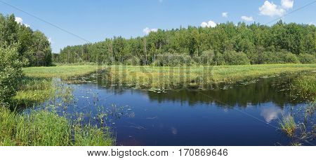 river in the forest overgrown with algae. summer landscape.