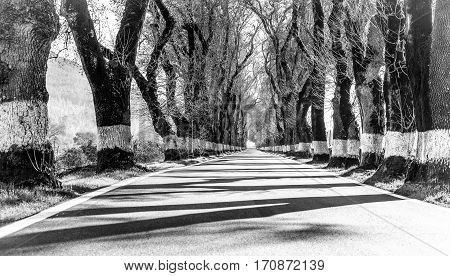a paved road and naked painted trees in the countryside in winter