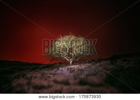 Skull Shape Tree Against Red Night Sky