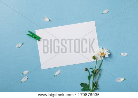 Spring top view composition: slanted blank stationary template / invitation mockup scattered petals around white flower with green stem clothespin. Flat lay. Sky blue background with copy space for text.