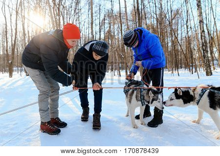 MOSCOW RUSSIA - FEBRUARY 02 2017: Children equip the sledge with huskies under the instructor's supervision.