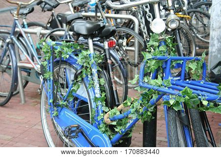 Decorated Bike In Amsterdam