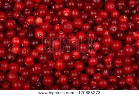 Fresh Red Ripe Cranberries Background Top View