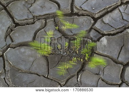 Green sprouts swaying in the wind on the cracked soil salt lake.