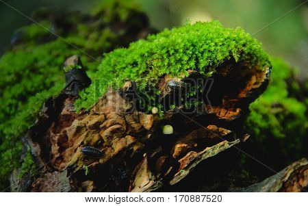 A mossy piece of old wood in the forest with lobes