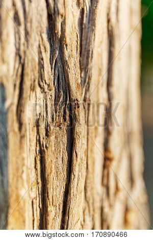 Macro view of bark of brown tree