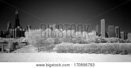 tree line in front of Chicago Skyline infrared black and white