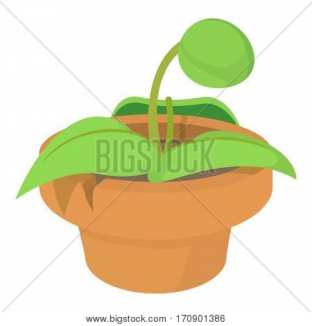 Plant in pot icon. Cartoon illustration of plant in pot vector icon for web