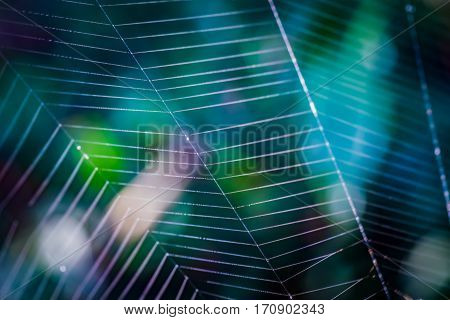 beauty design spider web spiderweb macro background cobweb - stock image