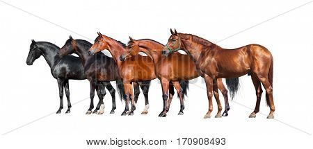 Horses isolated on white. Group of different horses standing on white background.
