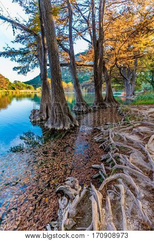 Fall Foliage From the Trees Lining the Crystal Clear Frio River at Garner State Park Texas.