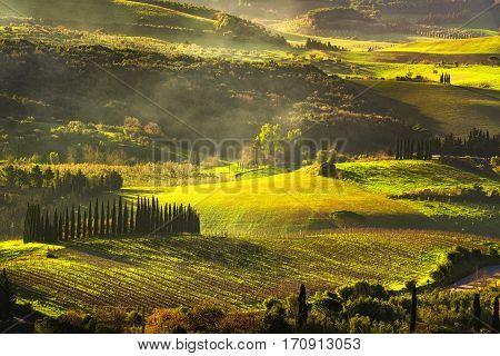 Maremma countryside sunrise foggy landscape vineyards rolling hills and trees. Bibbona Tuscany Italy. Europe.