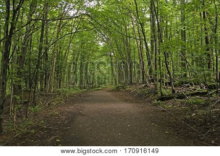 Shaded Trail in the Forest in Porcupine Mountains State Park in Michigan