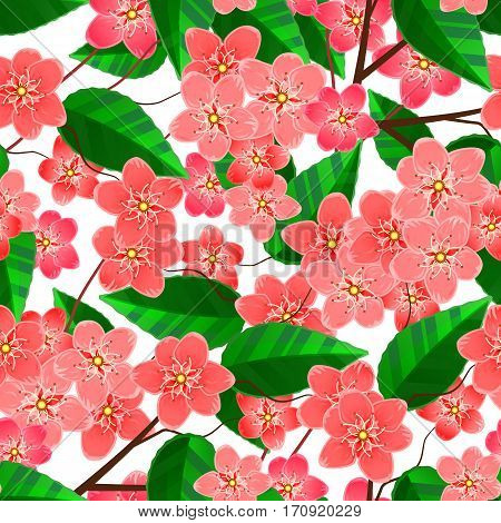Seamless pattern of sakura flowers and branches with foliage. Vector