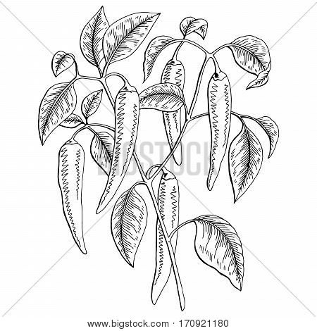 Chilli pepper graphic bush black white isolated sketch illustration vector