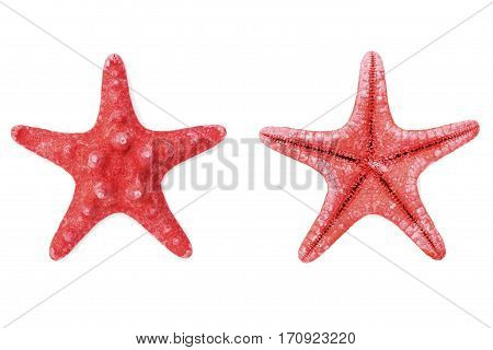 Red starfish or sea star isolated on white background, top view.