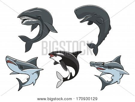 Shark, killer whale, hammerhead shark, sperm whale and blue whale isolated icon set. Dangerous marine predators for zoo aquarium symbol, underwater wildlife, t-shirt print design