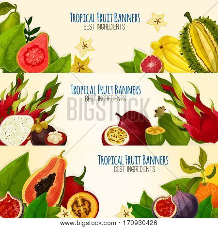 Exotic tropical fruit banner set. Sweet aroma papaya, orange, dragon fruit, feijoa, star fruit, mangosteen, passion fruit, durian, guava and tamarillo with green leaves and slices