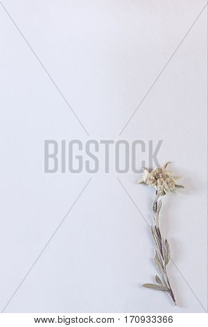 Textured paper background with dried edelweiss flower in the corner, vertical
