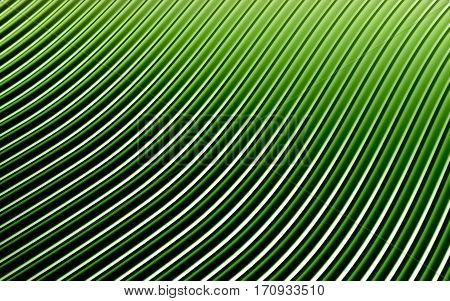 Green abstract image of lines background. 3d rendering