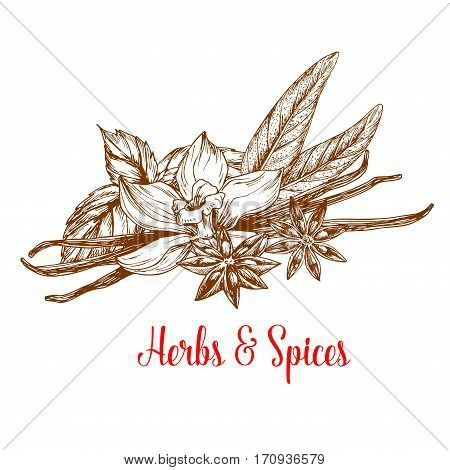 Herbs and spices sketch poster. Mint and tarragon plant fresh leaves with flower and pod of vanilla and anise star with seed. Condiment, seasoning, cooking ingredient, food themes design