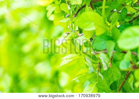 Close Up Green Leaf At Tree Hedge With Blue Background