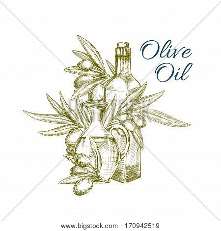 Olive oil and olive tree branch with fruits isolated sketch. Olive oil bottle and pitcher for healthy food and mediterranean cuisine themes or food packaging label design